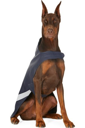 Stutterheim SSENSE Exclusive Navy Lightweight Dog Raincoat